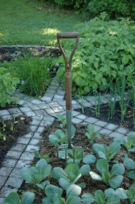 Small herb garden wheel...like this with a bird bath in the centre