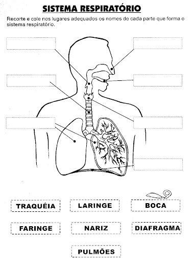 Pedagógiccos: Atividades sobre o Corpo Humano - parte 1