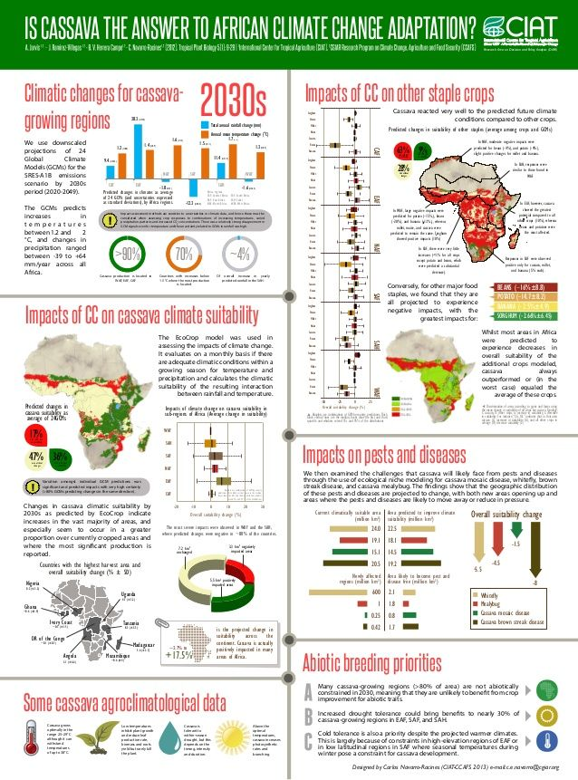 Is Cassava the Answer to African Climate Change Adaptation? Cassava appears very resilient to the predicted future climate conditions compared to other crops...