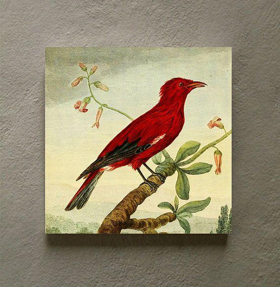 58 best Old botanical/nature prints images on Pinterest | Botanical ...