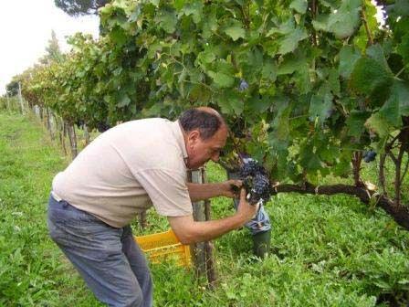 _______________________ -ITALIA-CAMPANIA: il vino Aglianico di Taurasia  by Francesco-Welcome and enjoy-  #WonderfulExpo2015  #Wonderfooditaly #MadeinItaly #slowfood #FrancescoBruno    @frbrun  http://www.blogtematico.it   frbrun@tiscali.it    http://www.francoingbruno.it   #Basilicata