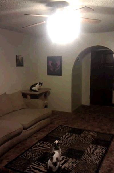 これはすごい!『我が家の猫は、明かりを消すのが大好きです。』 | A!@attrip