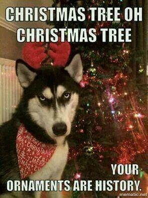 af1f3f64a490ba068fd8de50ac248e6c funny animal dog 26 best memes x mas images on pinterest christmas humor, funny