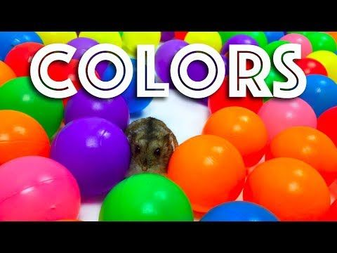 Learn Colors with Funny Humsters JOHNY JOHNY Yes Papa Nursery Rhymes Bad Kids - YouTube