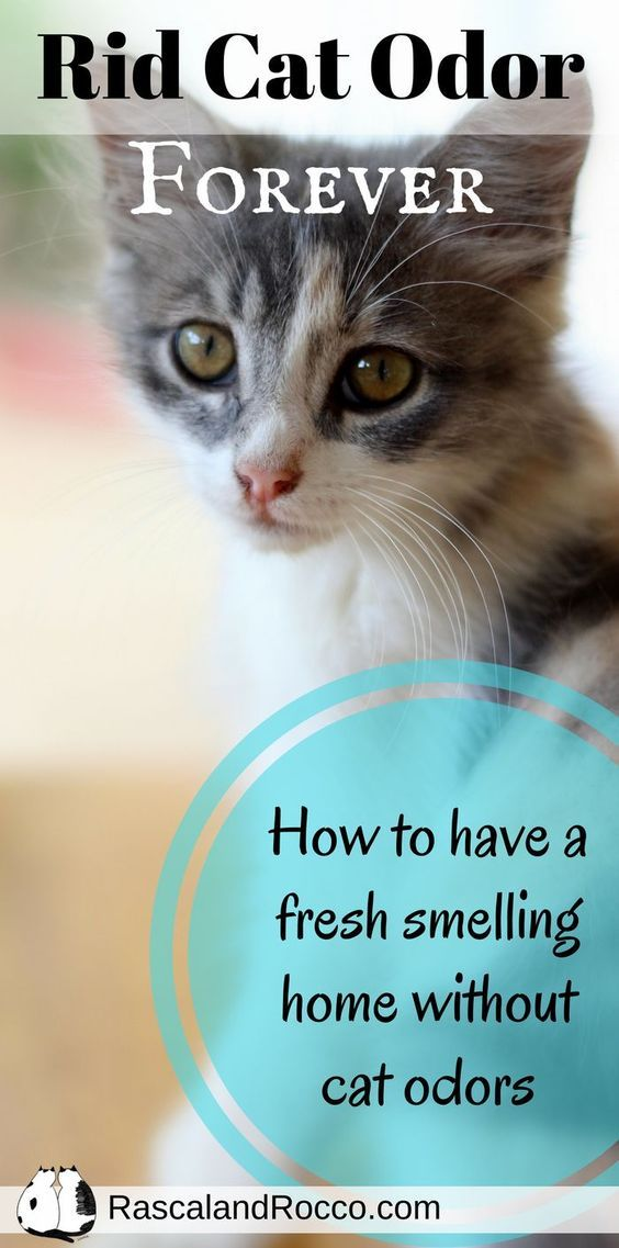 How To Get Rid Of Cat Odor Naturally | Way To Freshen Your Home | Get