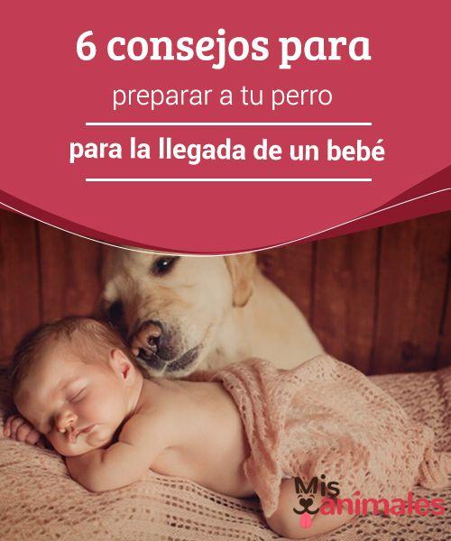 6 #consejos para preparar a tu perro para la llegada de un #bebé En muchos hogares las mascotas son tratadas como si fuesen personas. Miles de parejas consideran a su #peludo como un hijo. Entonces, ¿cómo #preparar al #perro para la llegada de un bebé? En este #artículo te damos algunos consejos que te pueden ayudar.