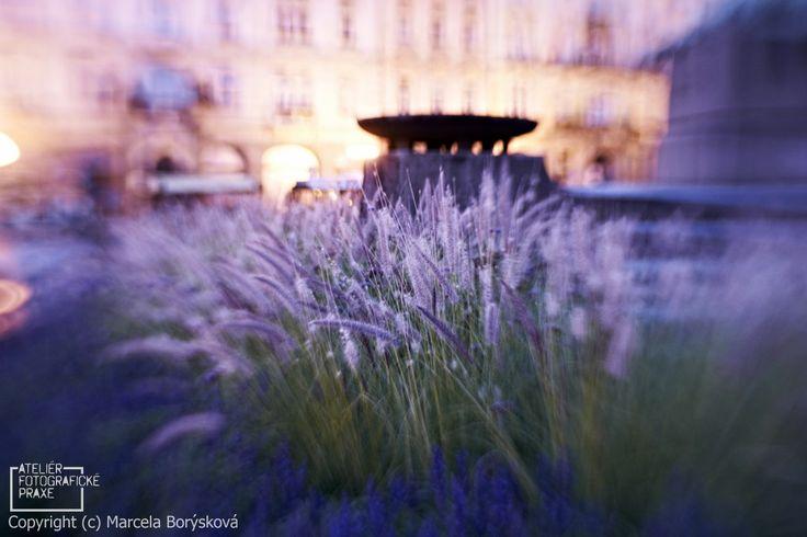 Fotografie z kurzu http://afop.cz/fotograficke-kurzy/kategorie/kurz-prace-s-lensbaby-zima-v-praze/ #fotografovani #kurz #fotokurz #fotografickekurzy #canon #nikon #Lensbaby