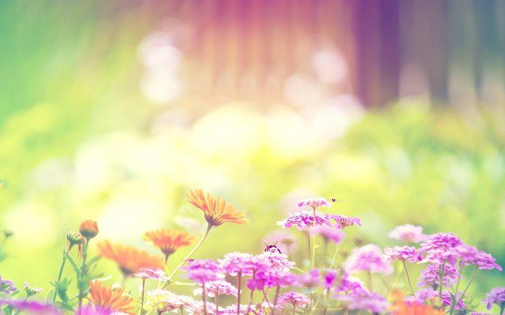 cute spring flowers hd desktop flowers desktop wallpaper