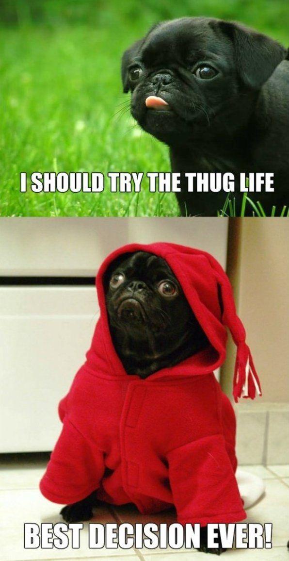 Funny Meme Thug Life : Thug life meme lol animal laughs pinterest