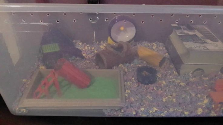 September Hamster Cage - Back to school theme