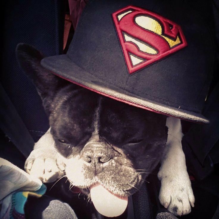 guizmo//casquette superman