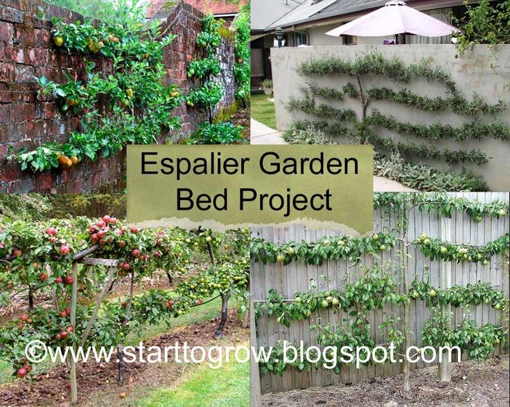 Superb Espalier Garden Bed Project   Part 1