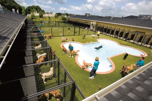 25 best ideas about dog boarding kennels on pinterest for Boarding facility for dogs