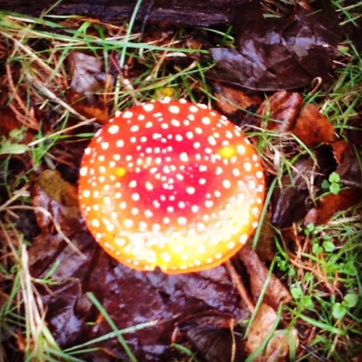 Today's garden find .... Don't worry it's not on the breakfast menu!