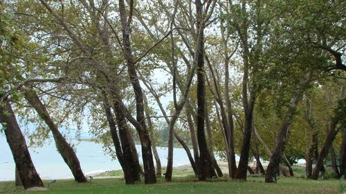 Trees - Trichonida lake
