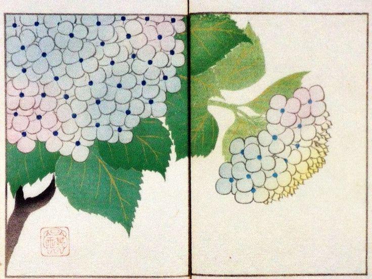 中野其玉 Nakano Kigyoku 其玉画譜 17 紫陽花 Book of pictures 17 Hydrangea