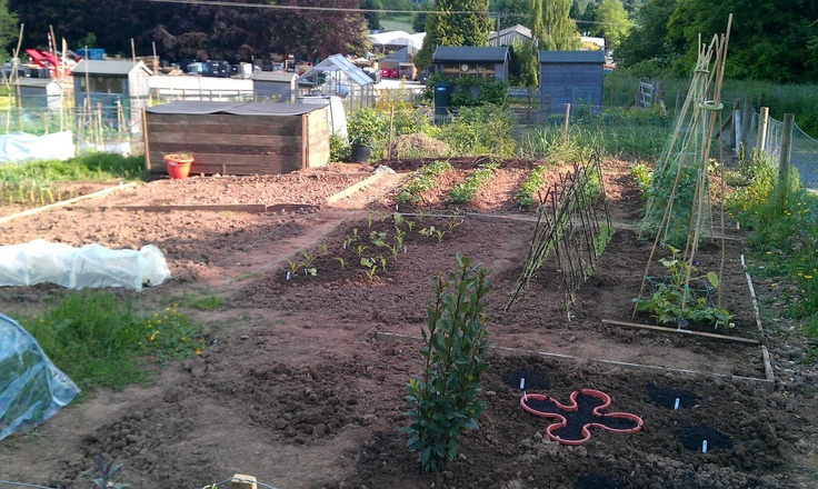 The allotment starting to come together. Potatoes, broad beans, peas, sweetcorn, courgette, beans and herbs all planted. Jun 2013