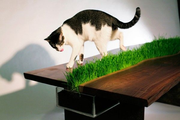 Cat-Friendly Table With Built-In Grass Planter
