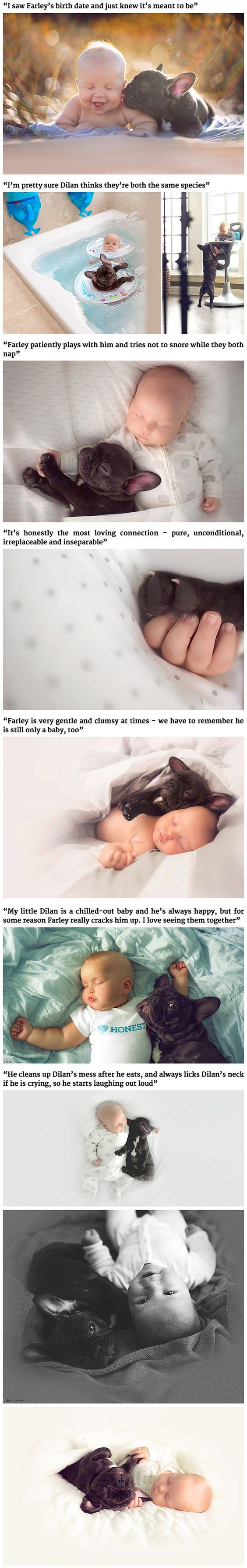 """Dog's are often called """"man's best friend,"""" but what about babies? When Chicago mother Ivette Ivens, 25, saw a French bulldog puppy that was born on the same day as her baby son Dilan, she knew it was a sign. """"I saw Farley's birth date and just knew it's meant to be,"""" she told the Daily Mail."""