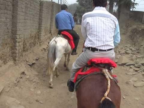 Horse riding at Kufri , Himachal Pradesh