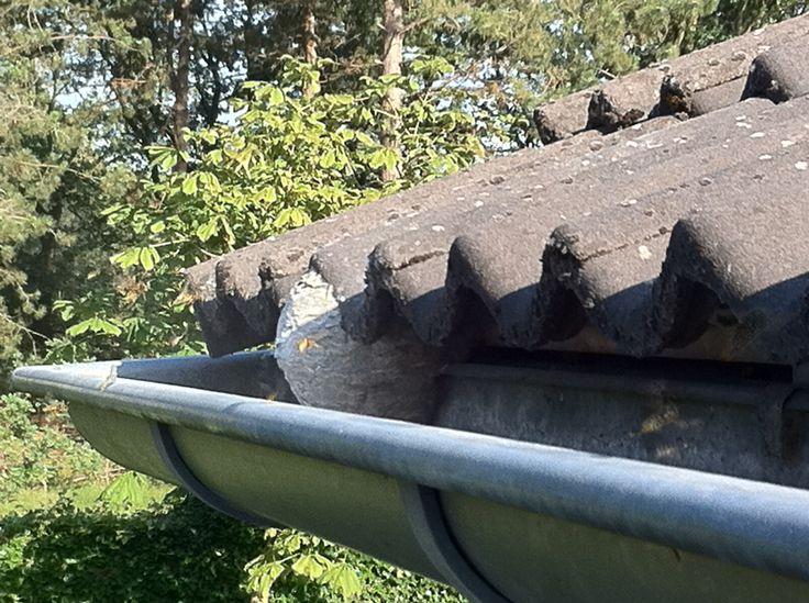 Wespennest onder de dakrand