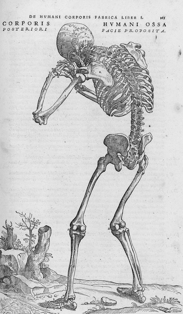 12 besten Human anatomy Bilder auf Pinterest | Andreas vesalius ...