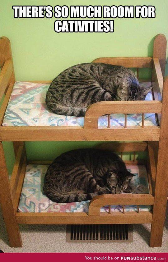 Feline step brothers