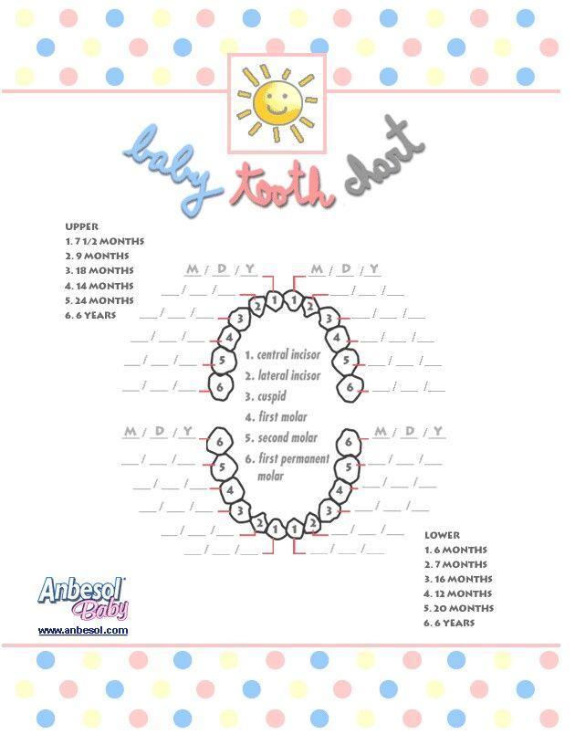 baby teeth growth chart