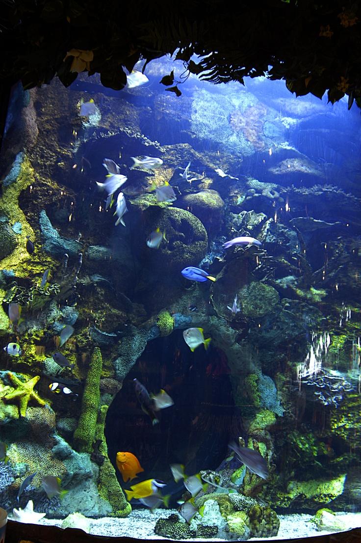 24 best the rainforest cafe images on pinterest cafes Atlantic city aquarium hours