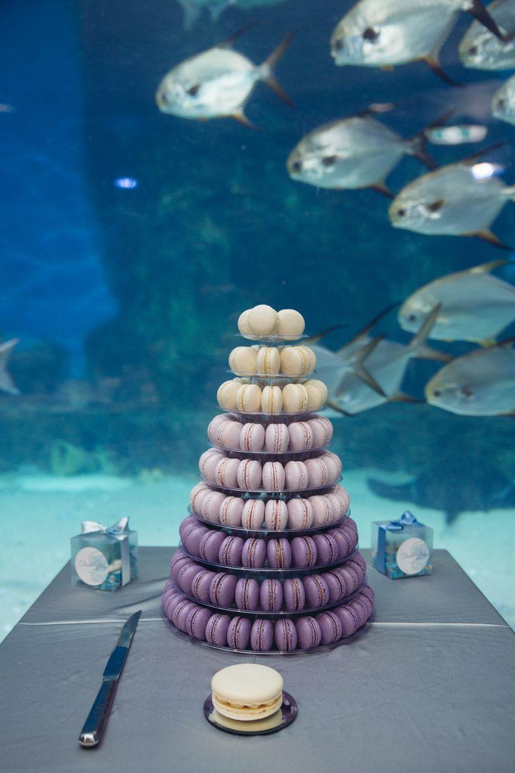 Ombre macaron tower, Melbourne Aquarium