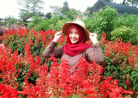 Taman Bunga Begonia Lembang Bandung