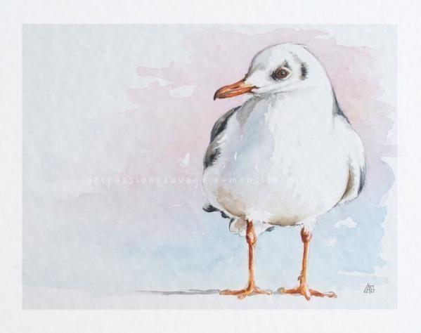 Mouette Aquarelle Art A Theme Oiseau Animaux D Aquarelle