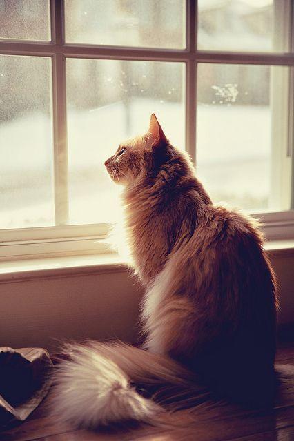 pensive by marlenapearl, via Flickr