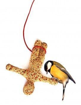 Vogelvoer https://nl.pinterest.com/search/pins/?q=soorten%20vogelvoer&rs=remove&0=soorten|typed&1=vogelvoer|typed&remove_refine=beste|typed