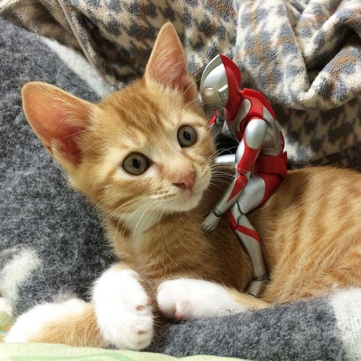 保護された子猫ちゃん。ウルトラマンに温かく見守られて…