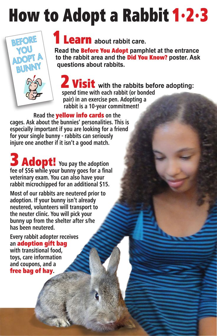 HOW TO ADOPT A BUNNY http://rabbit.org/posters-and-flyers/ Feb. Is Adopt a rabbit month