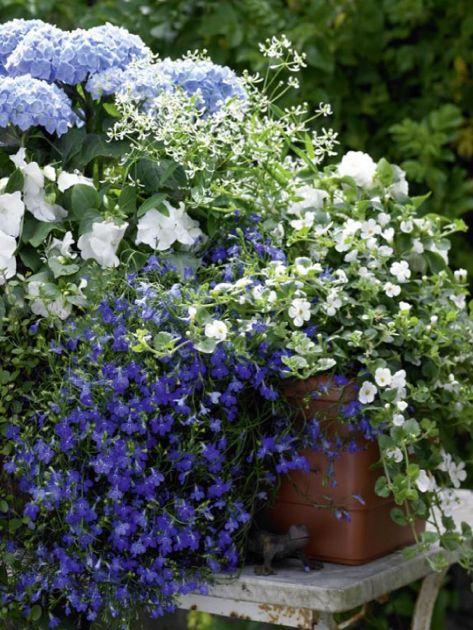 ▷ Balkonkästen - Ideen für alle Jahreszeiten zum Nachpflanzen: Balkonkasten mit…                                                                                                                                                                                 Mehr