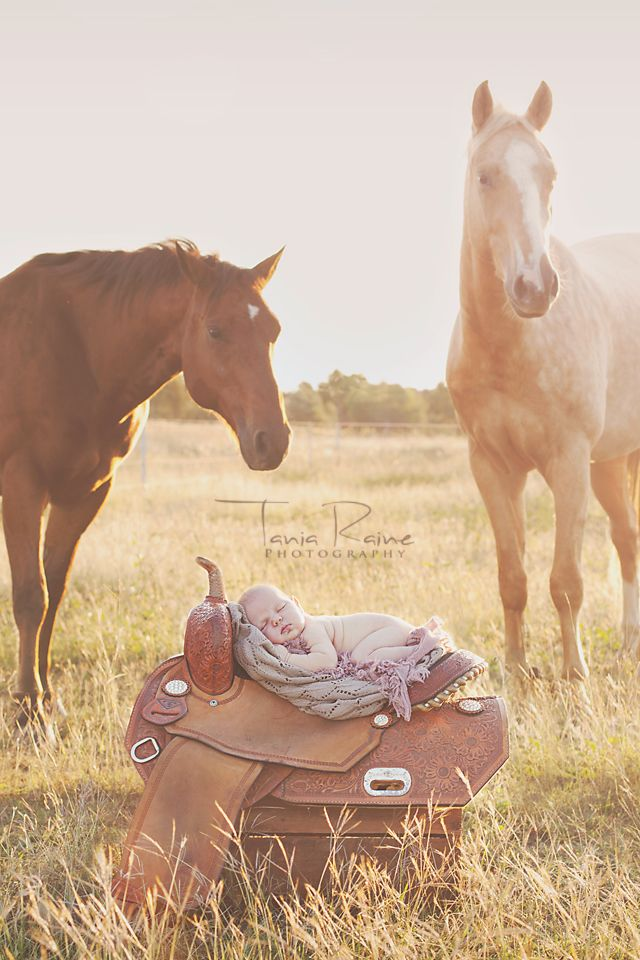 Best 25 western maternity ideas on pinterest western baby newborn baby on her mothers saddle please note this is a composite image baby was not near the horses at all and whilst on the saddle she was supported negle Choice Image