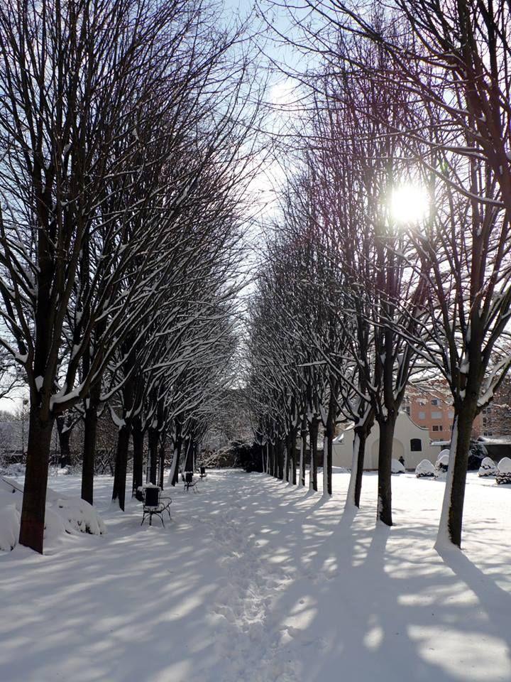 Udvardy Judit Havas park (Lamberg-kastély parkja, Mór) A kép 3 évvel ezelőtt készült. Több kép Judittól: www.facebook.com/judit.udvardy