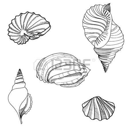 Shell Hand gezeichneten Vektor Set Lizenzfreie Bilder