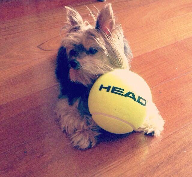 Ganhei uma bola de tênis e curti!