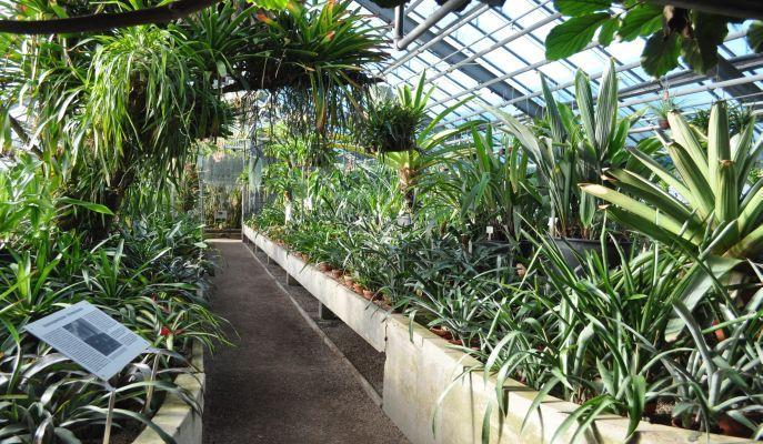 Botanischer Garten Heidelberg Plants Vesta