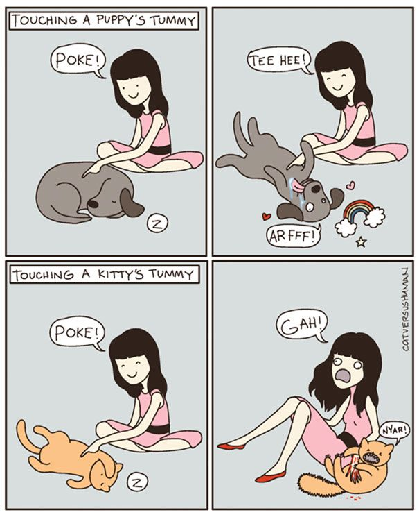 15+ Hilarious Comics That Perfectly Capture Life With Cats