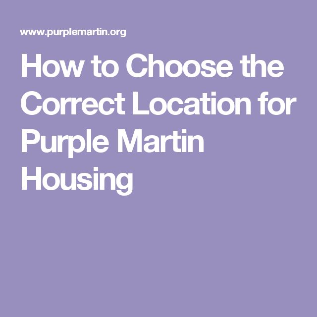 How to Choose the Correct Location for Purple Martin Housing