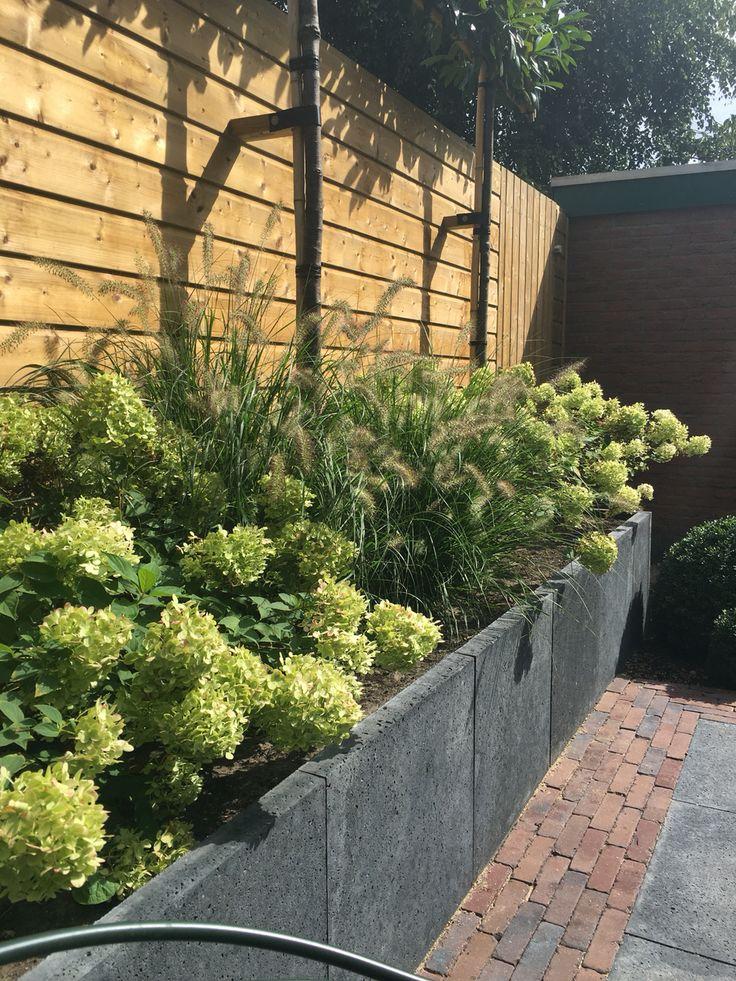 Hortensia's en grassen tegen schutting aan om de leibomen nog meer hoogte te geven