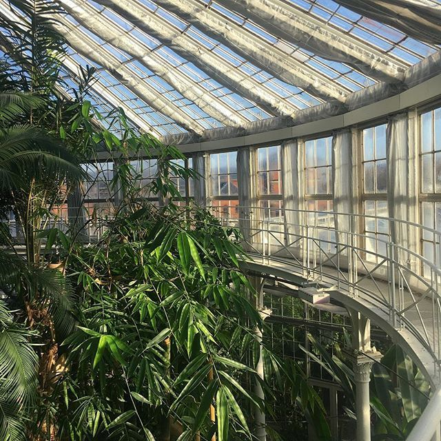 Var en tur forbi det fantastiske palmehus tidligere Idag 🌴🌵🎋#copenhagen