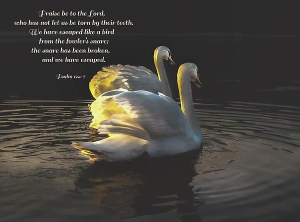 psalm 124:7