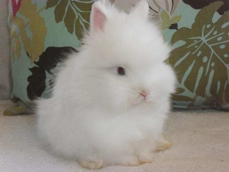 galery-naked-llionhead-rabbit-jujarati-clip-big