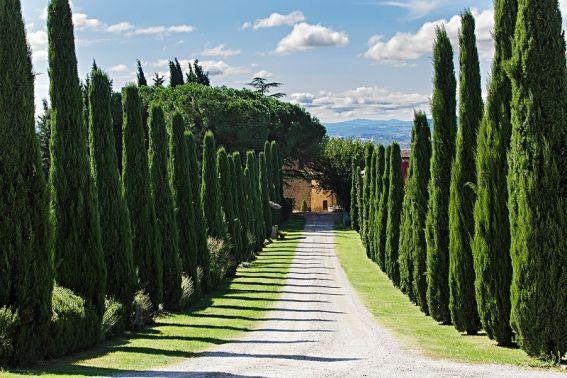 Stilechte Anreise Zum Al Gelso Bianco Zypressen Links Zypresse Rechts Das Weingut Im Blick Toskana Urlaub Gardasee Urlaub Urlaub