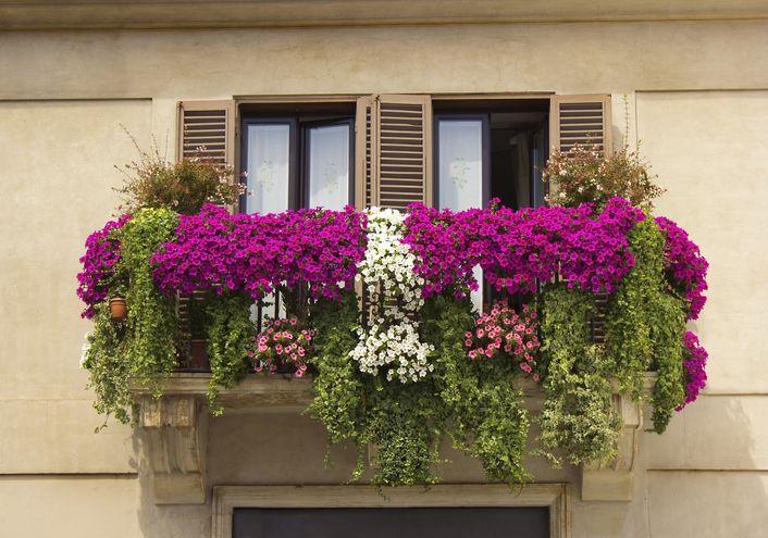 Piante a cascata sempreverdi, da balcone, da interno e da